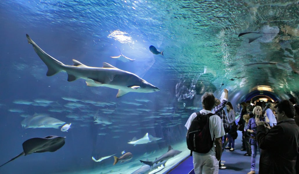 Oceanogràfic Valencia is reopening to the public beginning with the 1st of July